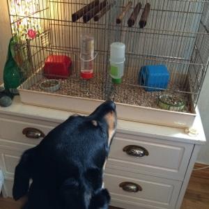 Selma fick ny sysselsättning! Hon kan sitta och titta på dem länge! Framför allt när de är ute :)
